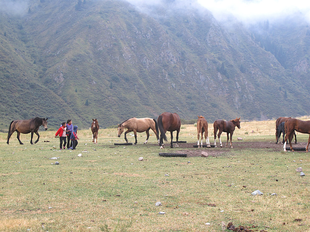 chevaux et enfants de Kirghizie
