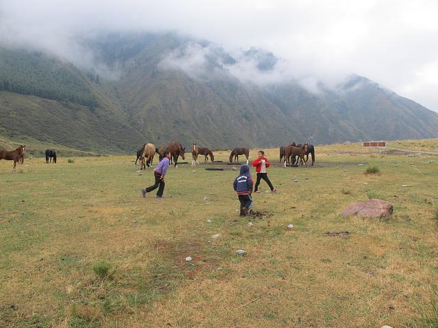 Chevaux kirghizes et enfants jouant