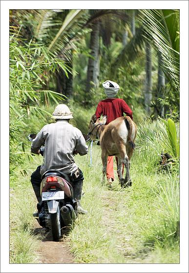Quelque part dans les rizières de Jatiluwih...