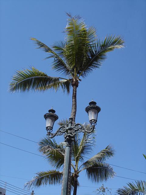 Éclairage électrique au fil des cocotiers....