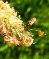 Fly & grass