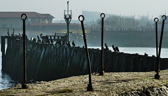 Misty and cold at North Shields