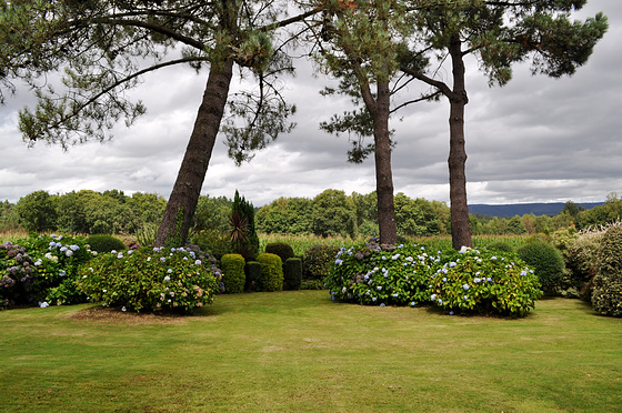 Un jardín de hortensias.