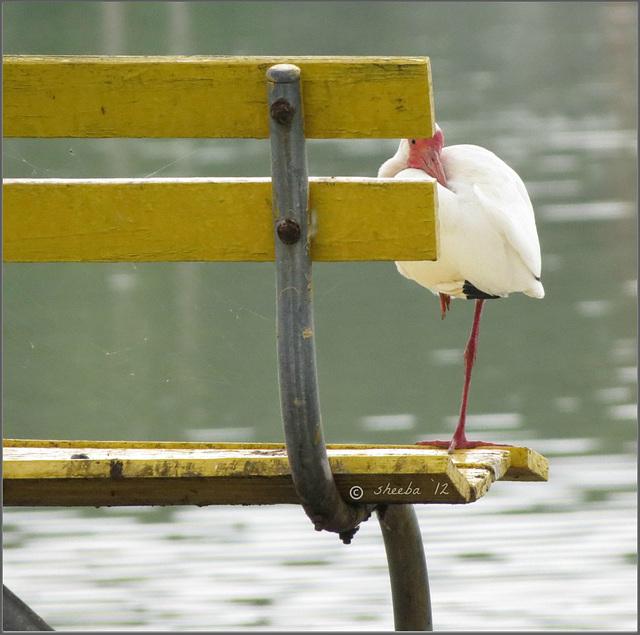 - my bench