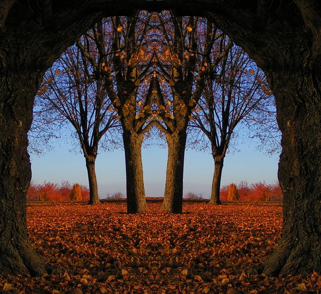 Franchissez la porte et ...rêvez......