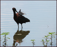 .. from one kind of reflection to a reflection preening