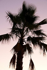 silouette of palm tree