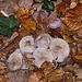 20111031 6762RAw [D~LIP] Pilz, Bad Salzuflen