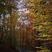 20111031 6757RWw [D~LIP] Herbstwald, Bad Salzuflen