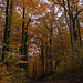 20111031 6756RWw [D~LIP] Herbstwald, Bad Salzuflen