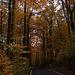20111031 6755RWw [D~LIP] Herbstwald, Bad Salzuflen