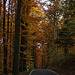 20111031 6754RAw [D~LIP] Herbstwald, Bad Salzuflen