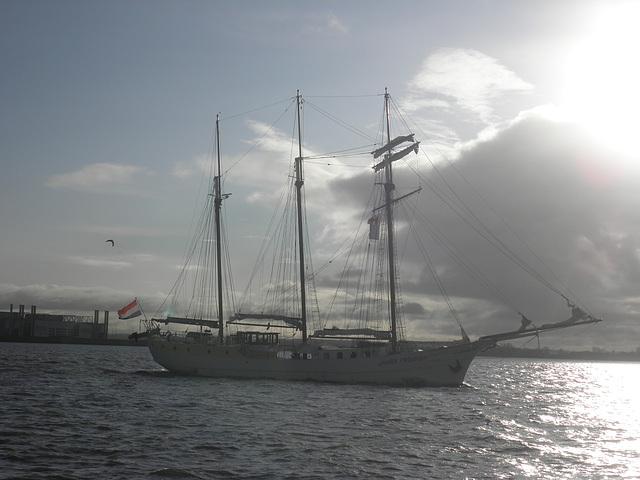"""Segelschiff  """"Mare Frisium"""" auf der Elbe"""