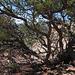 2014.09: UT: Kodachrome Basin State Park