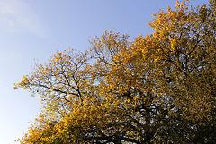 L'automne en diagonale