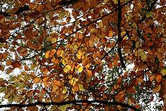 Parure d'automne