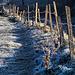 frosty morning - HFF!