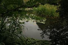 L'étang N°3