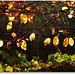 golden leaves (2)
