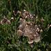 20110924 6546RAw Blütenpflanze ?????