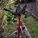 20110924 6509RAw Mangold