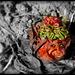 Troll de l'esprit de la rhubarbe