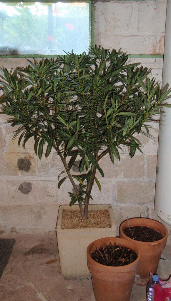 Hivernage des plantes for Hivernage des plantes