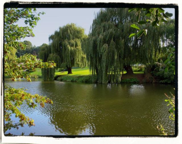 Willows by M del Vitto