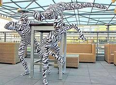 Zebraj gimnastikartistoj:  NOVA FORTO GENERACIO