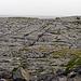 Burren-Coast