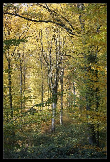 automne 143-1