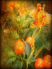 Rêve orange