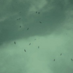 Amphibious Birds Fly Indefinite Black Dots