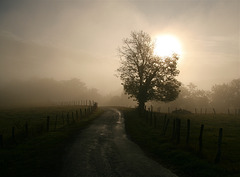Arbre, soleil et brume
