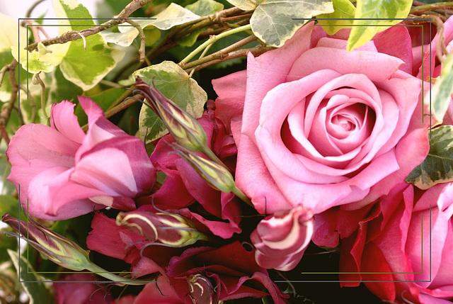 Ces roses pour vous tous mes fidèles amis