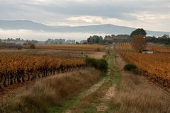 En Provence : l'automne