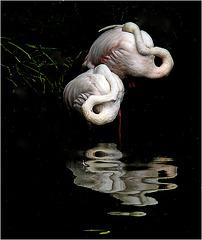 les oiseaux se cachent ....pour rêver