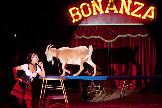 Tanja & Die Ziegen