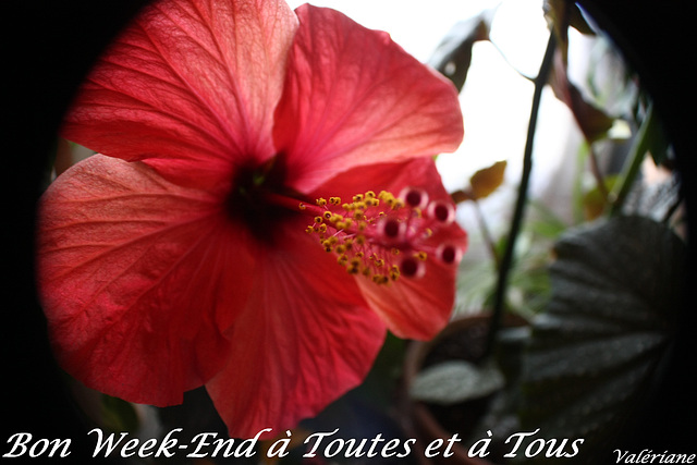 Bon week-end mes amis (ies)