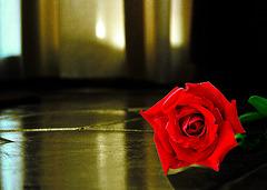 Una rosa caida