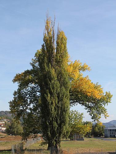 Un arbre peut en cacher un autre!