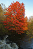 L'automne achève...