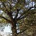 20111015 6641RAw [D-PB] Baum