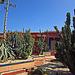 Cactus Garden On Kensington Road (0432)