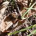 20111015 6638RA [D-PB] Wespe