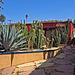 Cactus Garden On Kensington Road (0433)