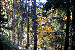 Herbstwald in Truden/Südtirol