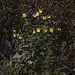 20111015 6616RAw 8D-PB] Blütenpflanze