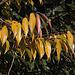 20111015 6606RAw [D-PB] Herbstfarben