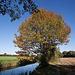 20111015 6603RWw [D-PB] Baum